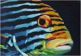 Orientalischer Süßlippenfisch (Kopf)